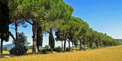 Learning Holidays for Teenagers and Families in Tuscany